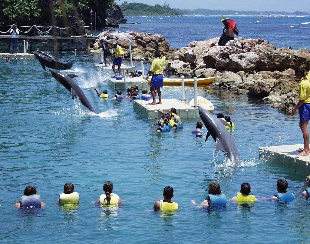 dolphin-cove-ocho-rios-jamaica