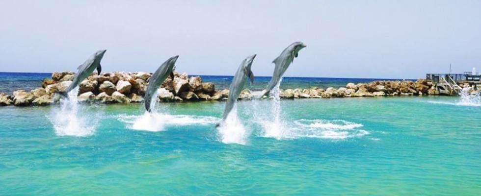 dolphin-cove-ocho-rios