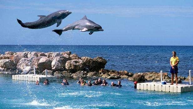 flying-dolphins-dolphin-cove-ocho-rios-jamaica