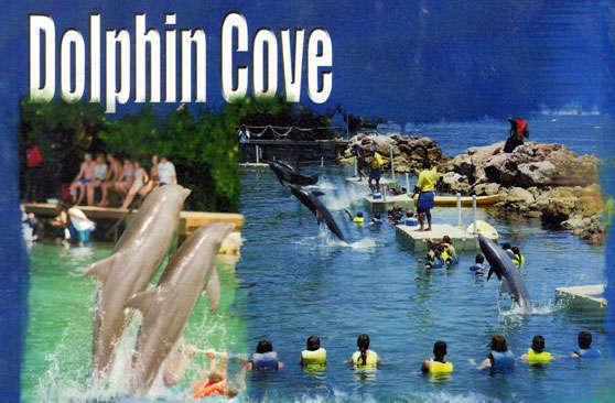 jamaica-dolphin-cove