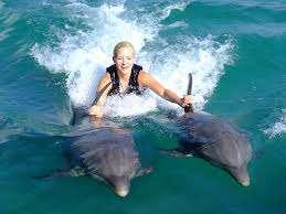 jamaica-ocho-rios-dolphin