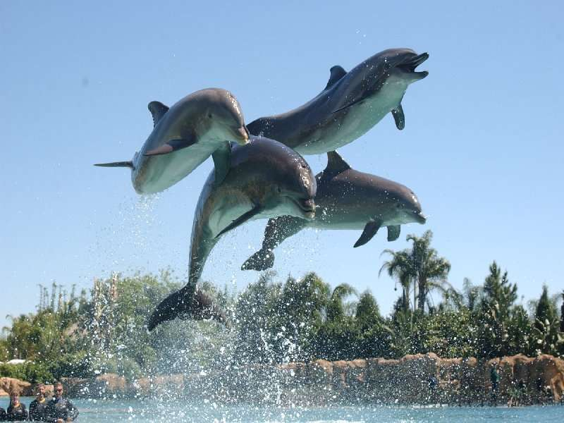 jumping-dolphins-dolphin-cove-jamaica