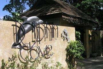 ocho-rios-dolphin-cove