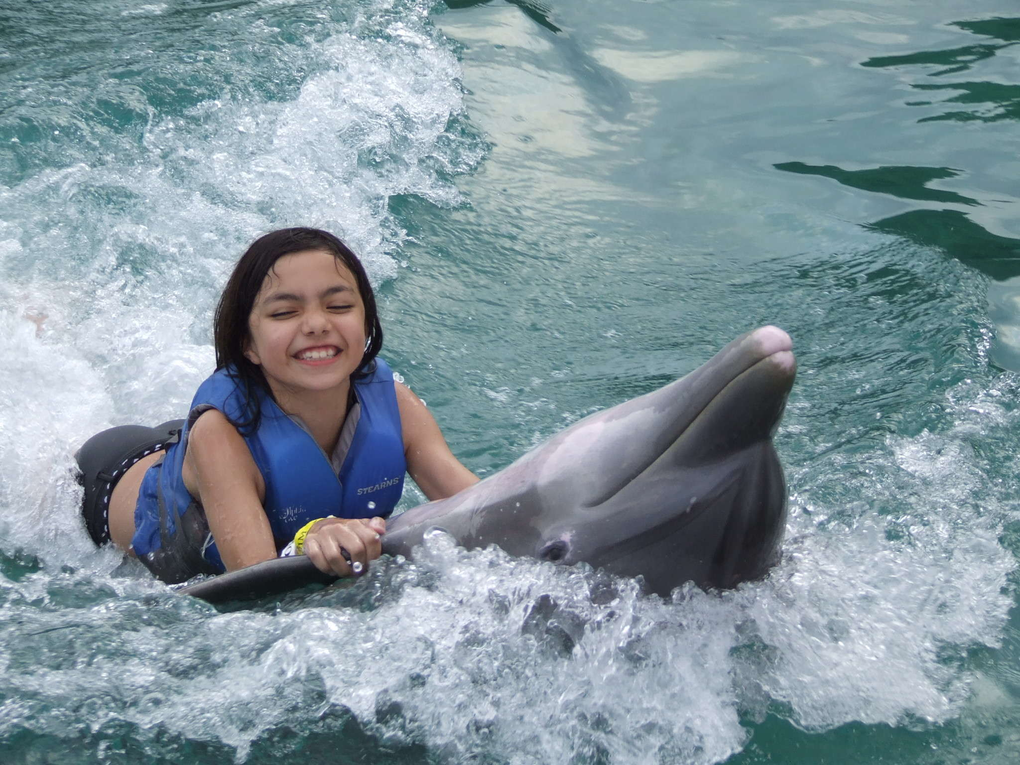 swimming-with-dolphins-dolphin-cove
